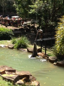 The crocodile show had us all in awe when Boss Hog jumped out of the water to catch his lunch.